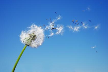 pollini primaverili